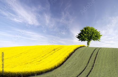 Foto op Plexiglas Platteland lonely tree in a field