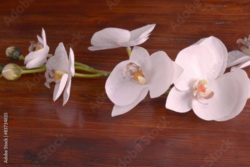 bialy-storczykowy-kwiat-na-drewnie