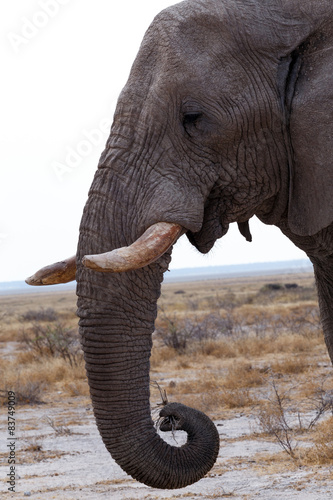 Photo  big african elephants on Etosha national park