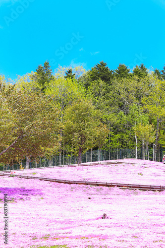 Poster Purper Landscape with pink flowers on the mountain, Takinoue, Hokkaido