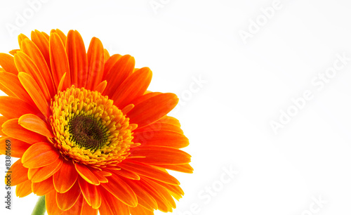 Papiers peints Gerbera Orange gerbera daisy flower isolated on a white background.