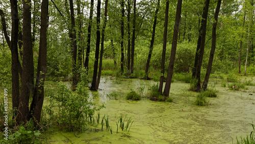 Fotografia, Obraz  the marshland
