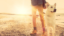 Girl Playing With Dog At A Beach, Strong Lens Flare Effect