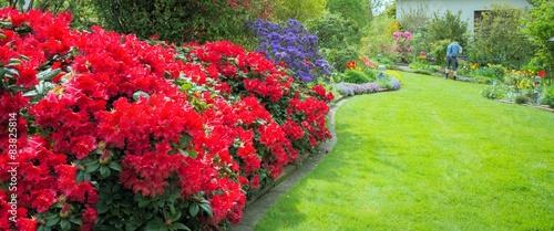 Deurstickers Azalea Garten mit roten Azaleen