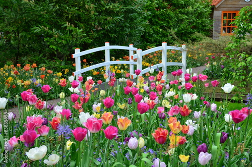 Tulips and a bridge in Keukenhof garden, Netherlands