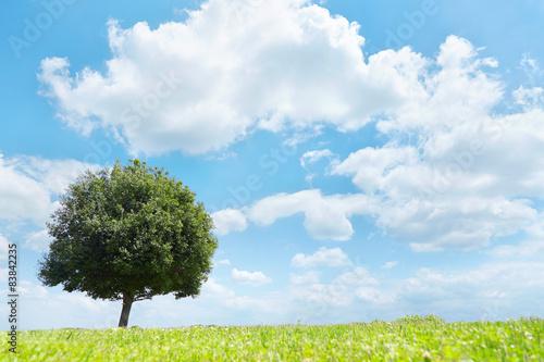 Fototapete - 一本木のある草原
