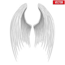 White Folded Angel Wings. Vect...