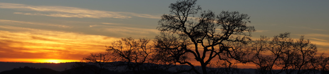 Oak Tree Silhouette Panoramic Sunset. Joseph Grant County Park, Santa Clara County, California, USA.