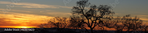 Oak Tree Silhouette Panoramic Sunset. Joseph D. Grant County Park, Santa Clara County, California, USA.