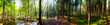 Frühling im Wald - Panorama