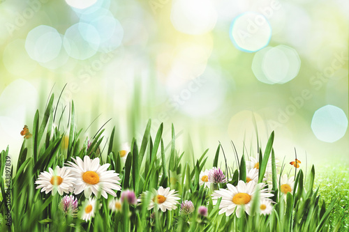 Poster Fleuriste Abstract natural landscape with beauty daisy flowers and bokeh