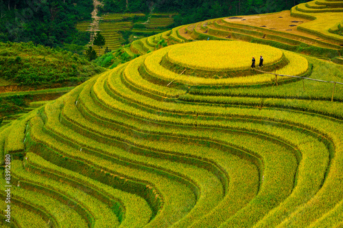 Garden Poster Rice fields Rice fields on terraced of Mu Cang Chai, YenBai, Vietnam