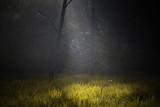 Leśna Opowieść,