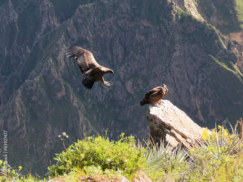 Photo Cruz del Condor andean condors