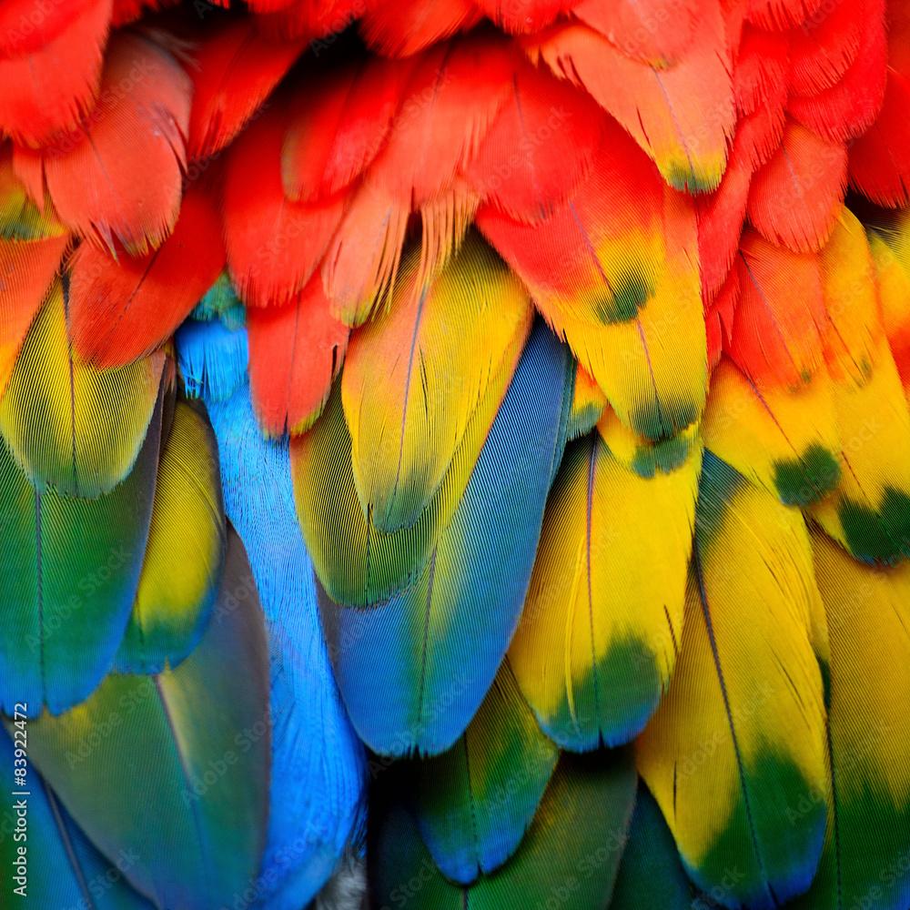 Szkarłatne pióra Ara