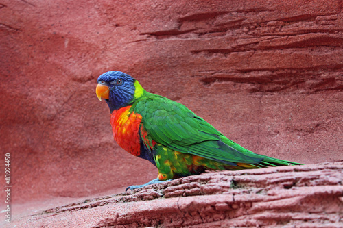 Photo Stands Parrot Regenbooglori
