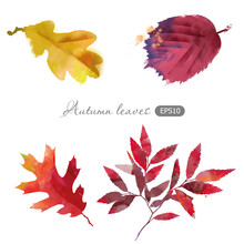 Watercolor Vector Set Of Autumn Leaves