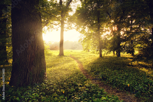 Photo  Sunlight on green forest