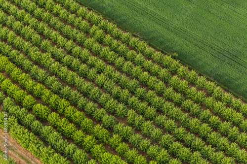 Fotografia aerial view of trees in an orchard