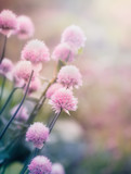 Pink flowers on the meadow - 83937221