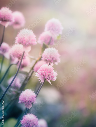 Pink flowers on the meadow