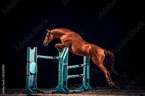 Fotografia Horse jump