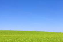 Green Field And Cloudless Blue Sky, Natural Background