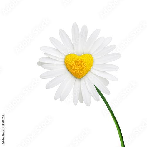 In de dag Madeliefjes Kamille in Form eines Herzens