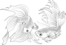 Vector Black And White Aquariu...