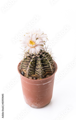 Foto op Canvas Cactus Cactus flower