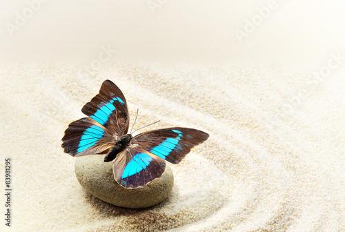 motyli-prepona-laerte-na-piasku