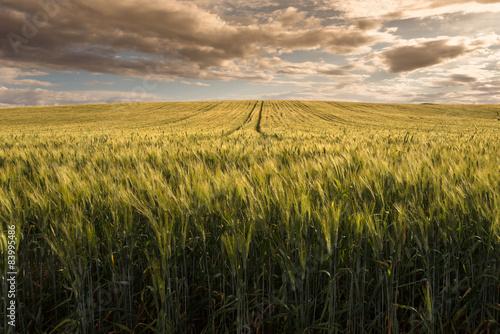 Fényképezés Sardegna, campo di grano