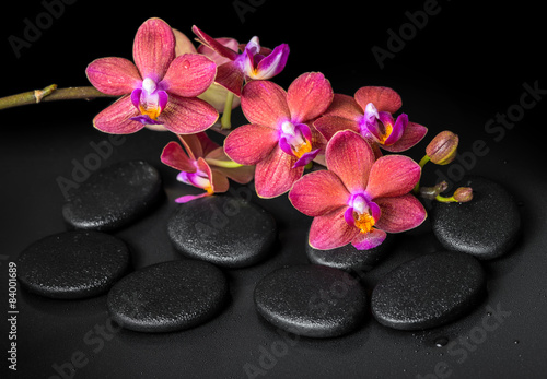Keuken foto achterwand Spa beautiful spa concept of blooming twig red orchid flower, phalae