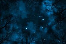Himmel Mit Sternen Und Wolken, Sicht Nach Oben Durch Bäume,