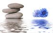 bannière zen galets et bleuets au bord de l'eau