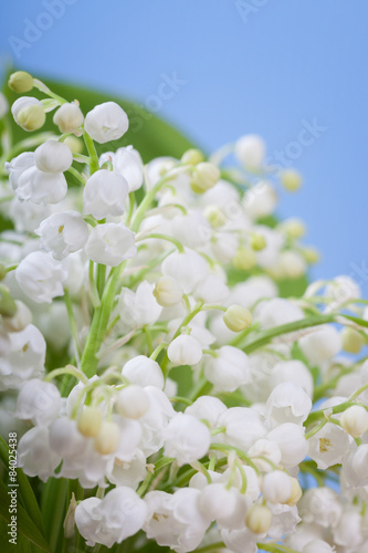 Wall Murals Lily of the valley Flower lily of the valley