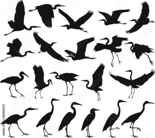 Bird - herons Fototapeta