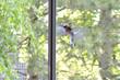 Leinwandbild Motiv Vogel vor dem Fenster