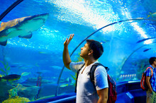 Curious Tourist Watching With Interest On Shark In Oceanarium