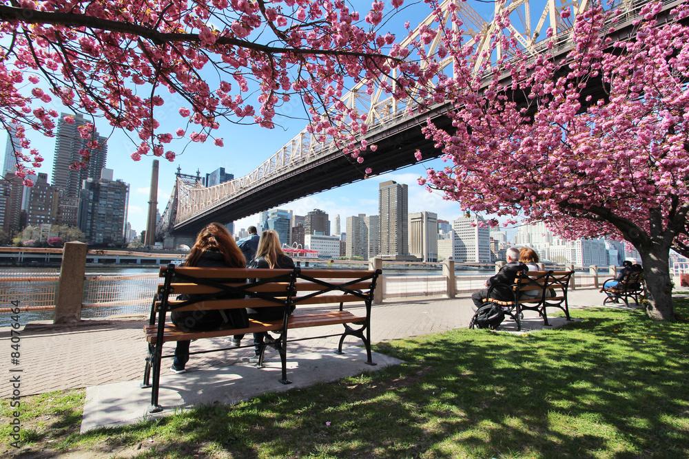 Fototapety, obrazy: New York City / Roosevelt Island