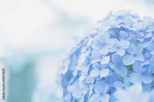 Spoed Foto op Canvas Hydrangea hydrangea flower