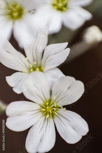 Garden Poster Floral Frische Blumen