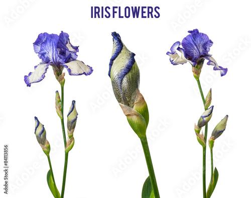 Spoed Foto op Canvas Iris mix purple iris