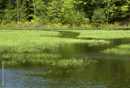 Fotografie, Obraz  Water trail in marsh grasses with woods in Hebron, Connecticut.