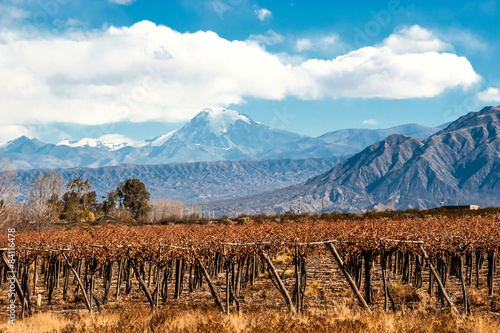 Fotografie, Tablou  Volcano Aconcagua and Vineyard, Argentine province of Mendoza