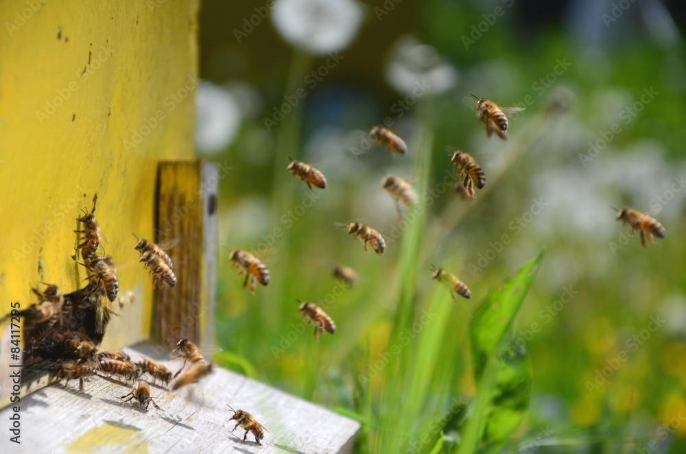 Fototapeta pszczoły wlatujące do ula w pasiece
