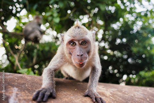 monkey macaque sitting on the stone close up