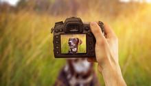 Tierfotografie Mit Dslr