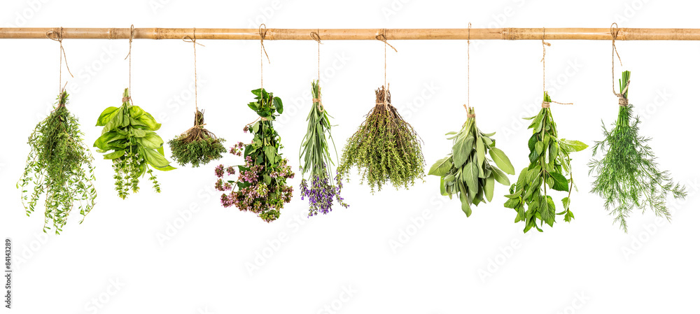 Fototapeta Collection of fresh herbs. Basil, sage, dill, thyme, mint, laven