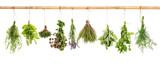Zbiór świeżych ziół. Bazylia, szałwia, koperek, tymianek, mięta, lawenda